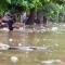 Lũ lụt tràn về Yên Bái: do rừng phòng vệ đầu nguồn ko còn?