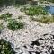 Công bố nguyên nhân cả ngàn tấn cá chết ở Đồng Nai