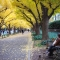 mùa thu Tokyo