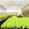 Vào Cầu Đất Farm ngắm trang trại nông nghiệp thông minh nhất VN