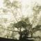 Kiếp sau xin chớ làm người....Làm cây vững chãi giữa trời bao la...