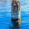 Khúc gỗ bí ẩn nổi trên mặt nước trăm năm khiến giới khoa học bó tay