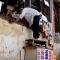 TP.HCM: Cụ già 84 tuổi run rẩy leo thùng gỗ cao hơn 1,2m để vào nhà