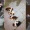 Thủ phạm ném 4 chó con giá 40 triệu từ tầng 40 chung cư Linh Đàm xuống đất