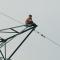 Bình dương: Người từng cố thủ trên cột điện cao thế... lại leo cột điện