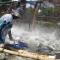 hiện thực cay đắng : Muốn xuất khẩu cá tra phải học tiếng Trung, bỏ qua Anh, Nhật