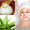 Điều trị tàn nhang và làm đẹp da hiệu quả từ nước vo gạo