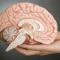 Quét não của những người mất một tay bẩm sinh, các nhà khoa học nghi ngờ bấy lâu nay mình đã hiểu sai về não bộ