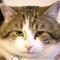 Con mèo 'định cư' trong dinh Thủ tướng Anh bất chấp ai nắm quyền
