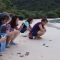 Côn đảo quy định thu tiền 50.000 đồng/lượt để thả rùa con về biển, liệu có hợp lý?