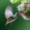 loạt ảnh  bác Bùi Trọng Hiếu :  chụp ảnh macro và chụp ảnh thiên nhiên hoang dã