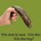 feed thumb