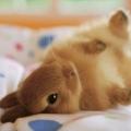 bunny911
