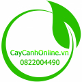 caycanhonline